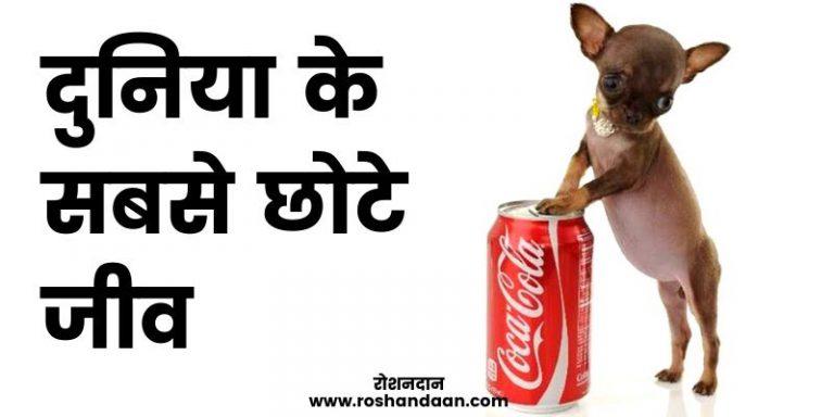 world smallest animal in hindi