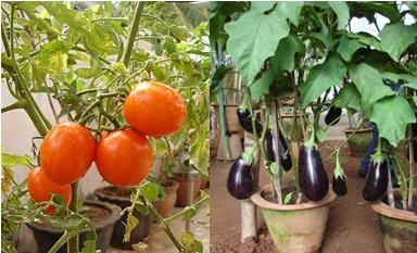 kitchen vegetable garden